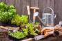 Légumes à cultiver